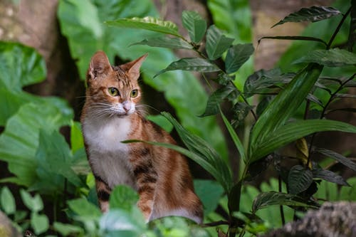 Tricolor Calico Cat Sitting Beside Green-Leafed Plant