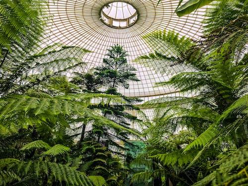 シダ, ドーム, 庭園, 木の無料の写真素材
