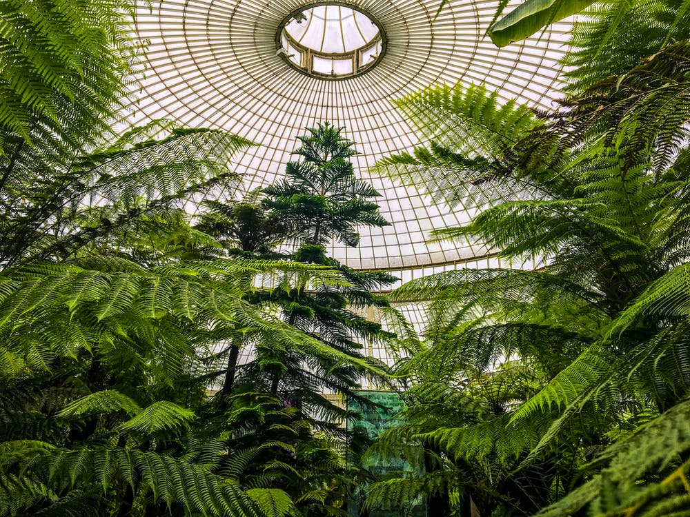 Green-leafed Trees Under a Dome Building