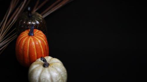 Darmowe zdjęcie z galerii z jesień, święto dziękczynienia