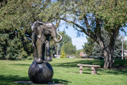 Darmowe zdjęcie z galerii z medytować, odbicie, park, słoń