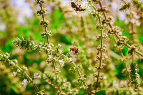 Foto profissional grátis de abelha, abelhas, close, flor da primavera