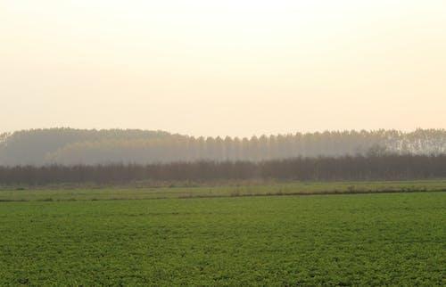 가을, 경치, 나무, 녹색의 무료 스톡 사진