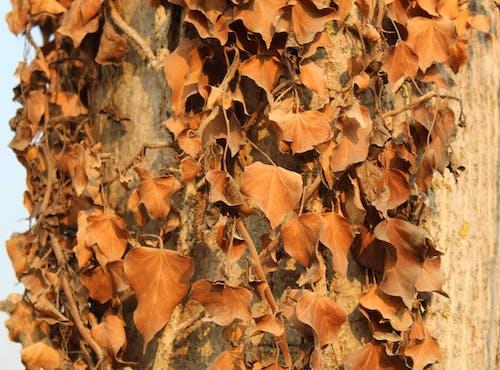 가을, 경치, 나뭇잎, 날의 무료 스톡 사진