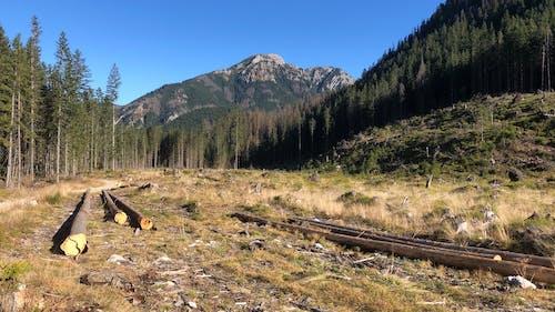 Kostnadsfri bild av bergen, spår, tatry