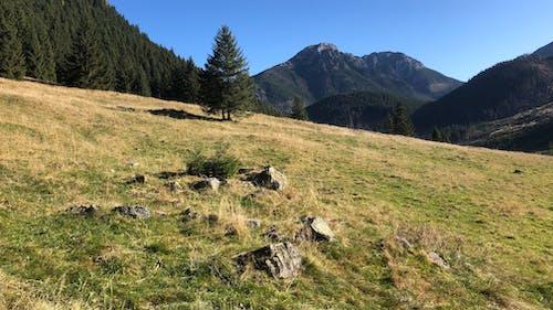 Kostnadsfri bild av bergen, dal, tatry