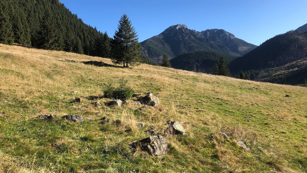 hory, tatry, údolí