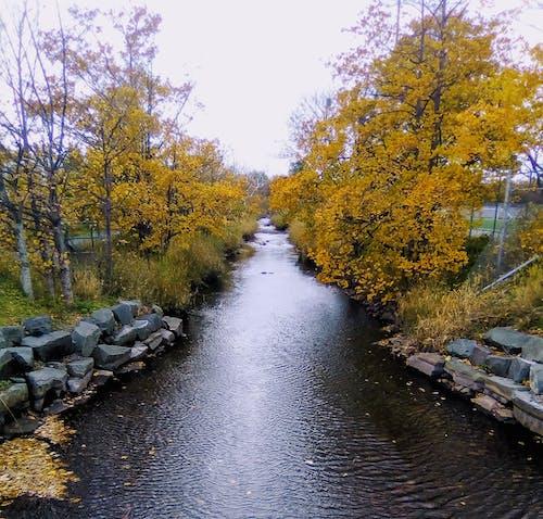 Free stock photo of autumn, river, urban