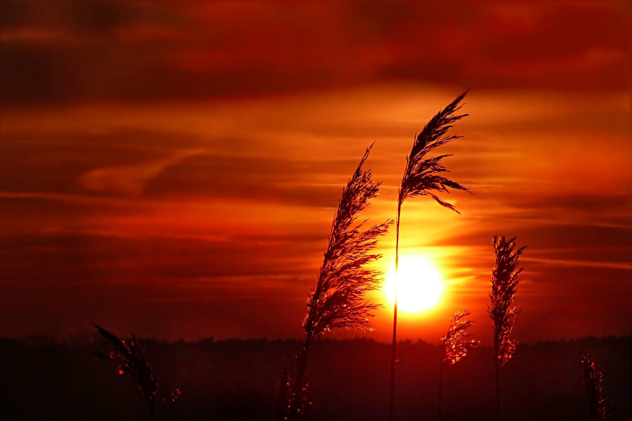 Free stock photo of nature, sunset, beautiful, mood