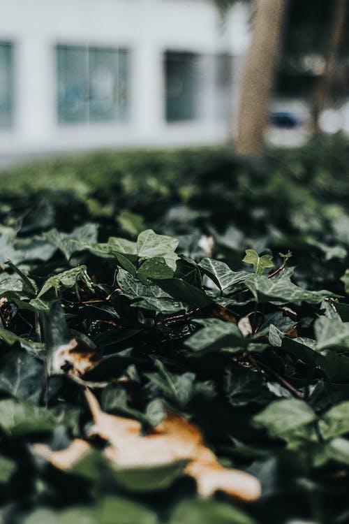 Free stock photo of beauty of nature, bokeh, dark green, dark green plants