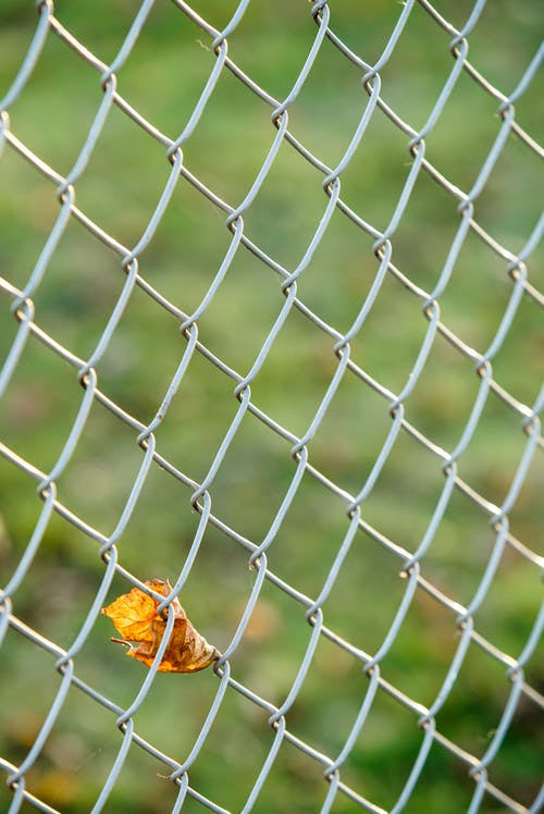 Dried Leaf on Chain-Link Fence