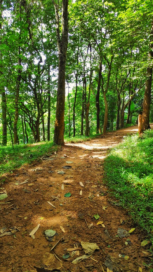 Free stock photo of dense forest, forest path, narrow road