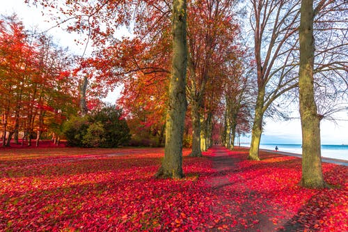 Free stock photo of autumn, away, colors of autumn, tree