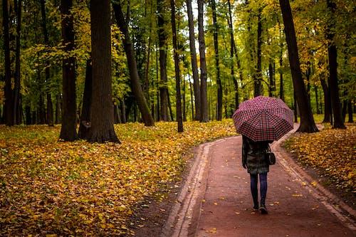 Бесплатное стоковое фото с ветви деревьев, Взрослый, деревья, дорога
