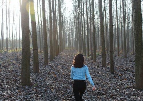 Ingyenes stockfotó ember, futó nő, kék, nyárfa témában