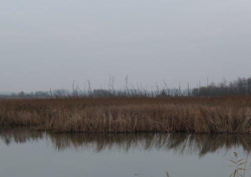 Ingyenes stockfotó ősz, rugó, tó, tópart témában