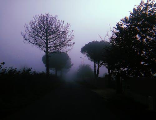 가을, 거리, 경로, 길의 무료 스톡 사진