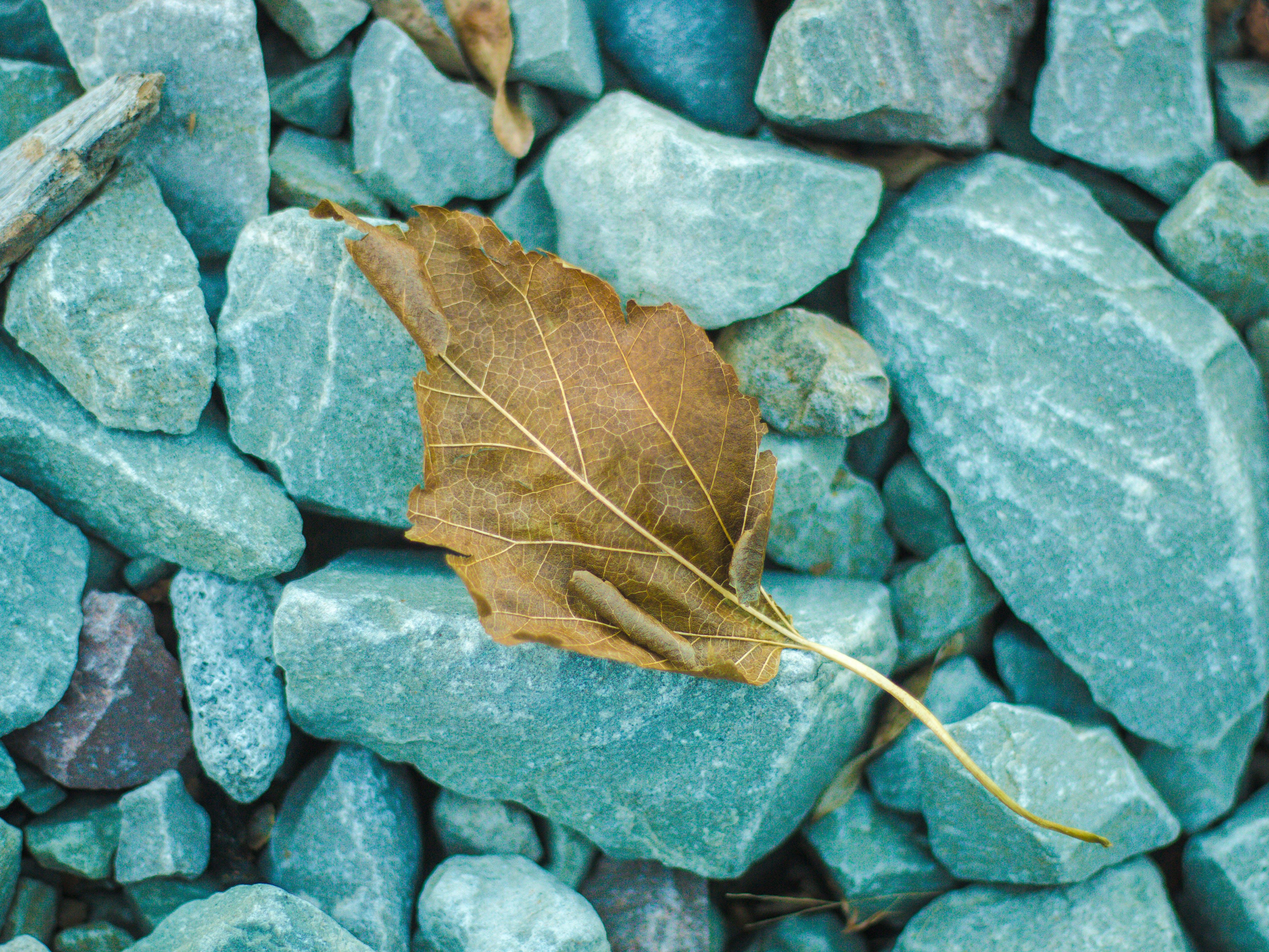 Free stock photo of amazing, autumn leaf, beautiful, beauty