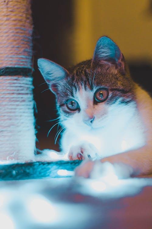 Photo Of Tabby Cat