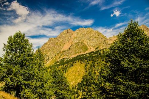Imagine de stoc gratuită din albastru, arbori, bolovan, cer albastru