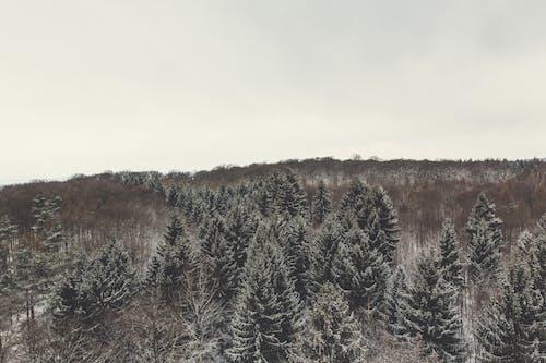 Ingyenes stockfotó ágak, befagyott, darált, domb témában