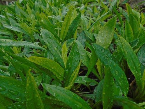 bahar, bitkiler, çim, çiy içeren Ücretsiz stok fotoğraf