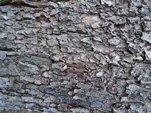 ağaç, ağaç kabuğu, ahşap, eski içeren Ücretsiz stok fotoğraf