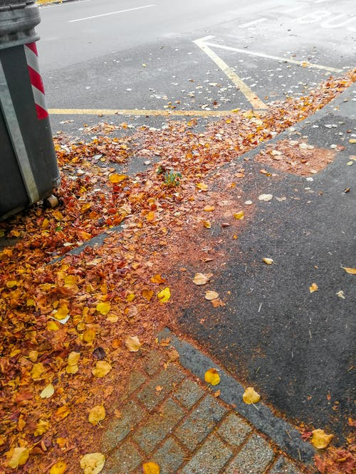 가을, 가을 색, 거리, 단풍의 무료 스톡 사진