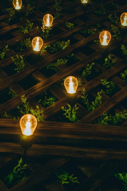 電球の無料の写真素材