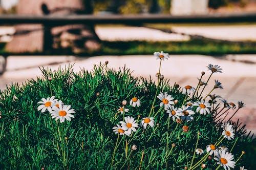 คลังภาพถ่ายฟรี ของ ดอกกุหลาบ, ธรรมชาติ, พืช, ภูมิทัศน์