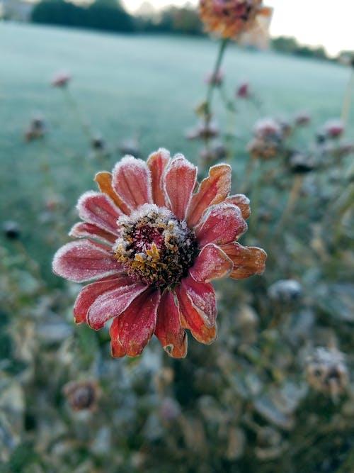 꽁꽁 언, 몹시 추운, 서리, 아름다운 꽃의 무료 스톡 사진