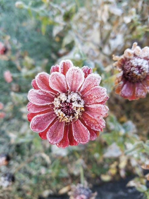 감기, 꽃, 꽃무늬, 몹시 추운의 무료 스톡 사진