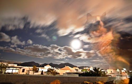 Immagine gratuita di gatto, montagne, notte, nuvole