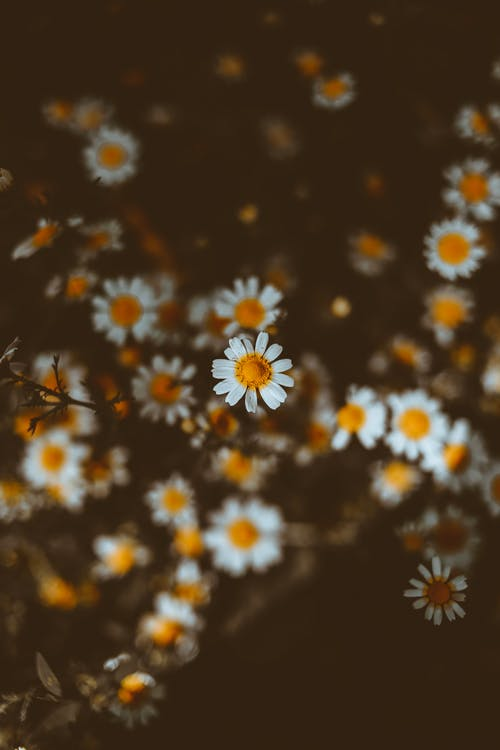 4k duvar kağıdı, açık hava, Bahçe, bitki örtüsü içeren Ücretsiz stok fotoğraf