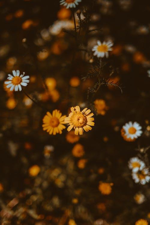 Foto profissional grátis de flora, flores, foco seletivo, folha
