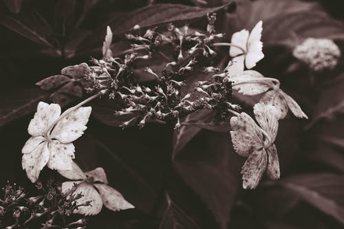 植物, 植物群, 烏賊, 白花 的 免費圖庫相片