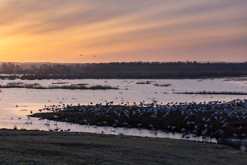 Photos gratuites de lac, oiseaux
