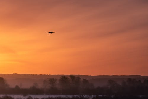 Free stock photo of bird, crane, sunrise
