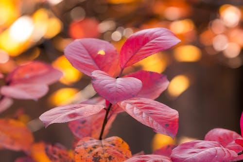 가을, 보케, 붉은 잎의 무료 스톡 사진