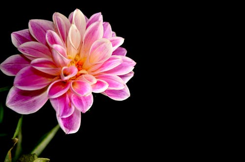 Free stock photo of black, dark, flower