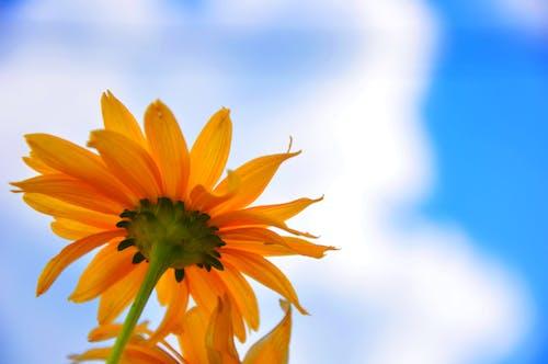 Free stock photo of blue sky, flower
