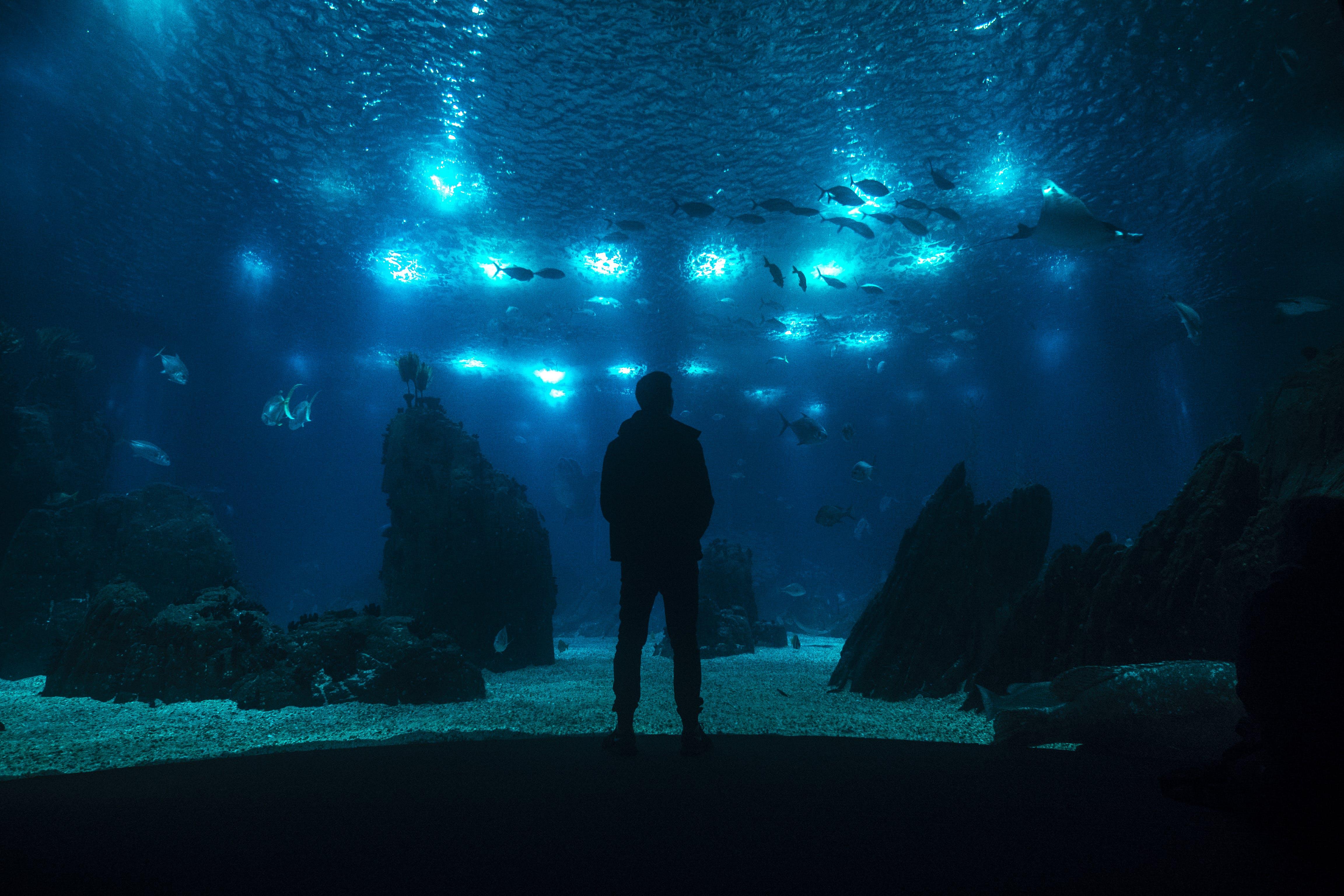 Free stock photo of aquarium, fishes