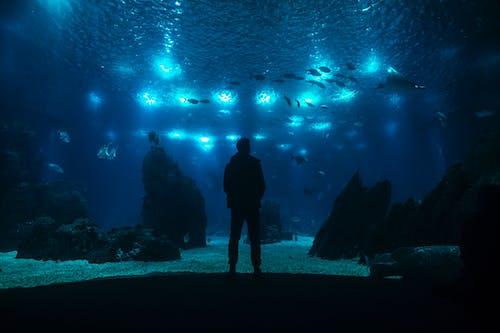Fotos de stock gratuitas de acuario, peces