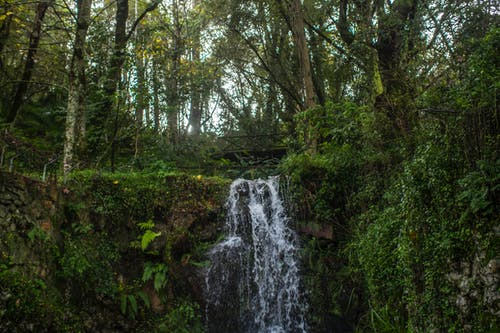 Free stock photo of forest, waterfall