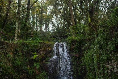 Foto profissional grátis de cachoeira, floresta