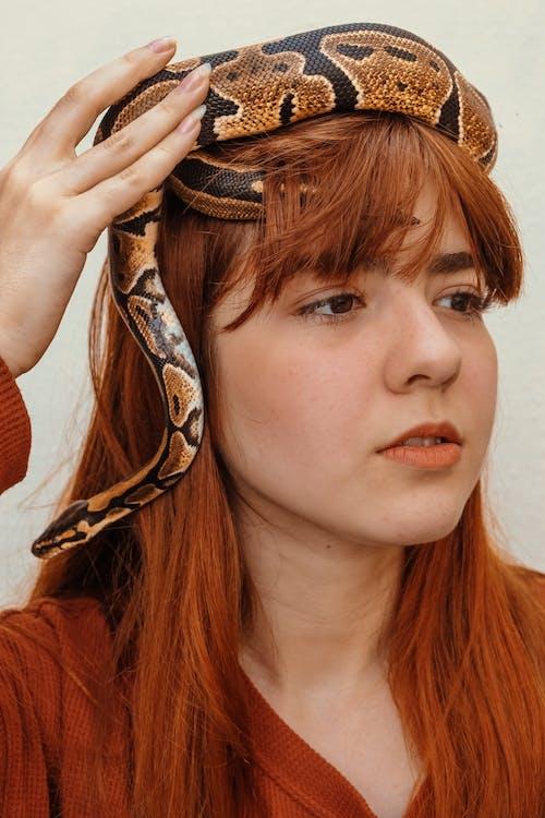 Ảnh lưu trữ miễn phí về con rắn, đàn bà, đối mặt, mô hình