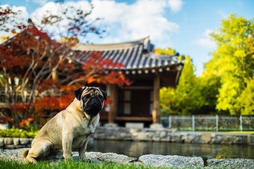 Imagine de stoc gratuită din adorabil, animal de casă, animal de companie, apă
