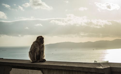 Free stock photo of ape, chimpanzee, sea