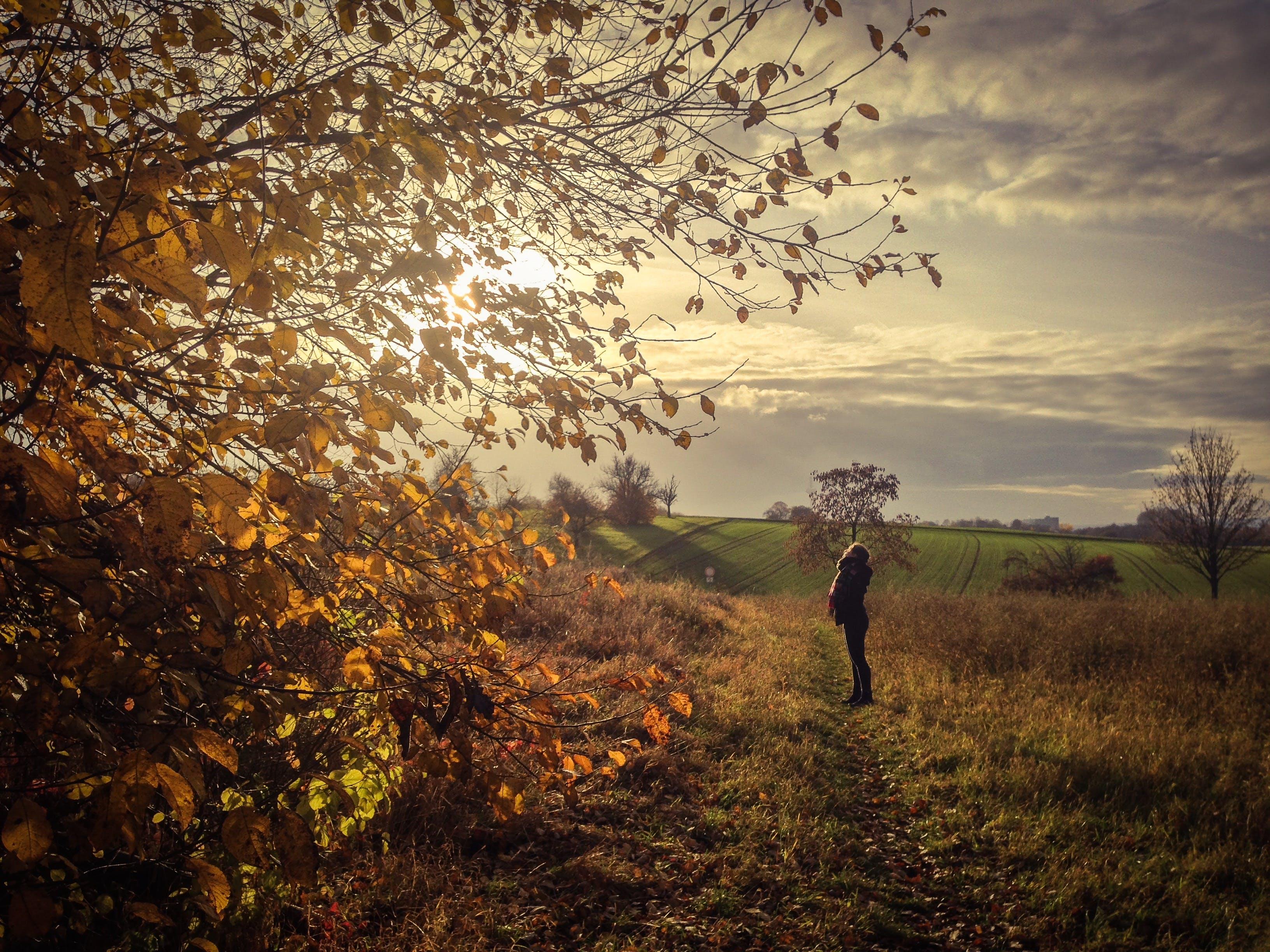 Free stock photo of autumn, girl, leaves, sun