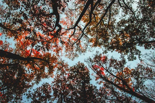 Foto profissional grátis de árvores, cênico, filiais, folhagem